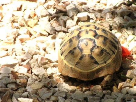 Ausflug Pag Schildkröte